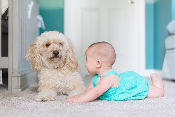 a dog and baby on carpet